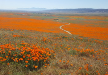Antelope Valley Poppy Reserve Cruise